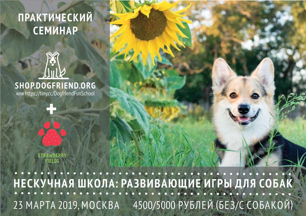 Купить билет на семинар по развивающим играм для собак в Москве
