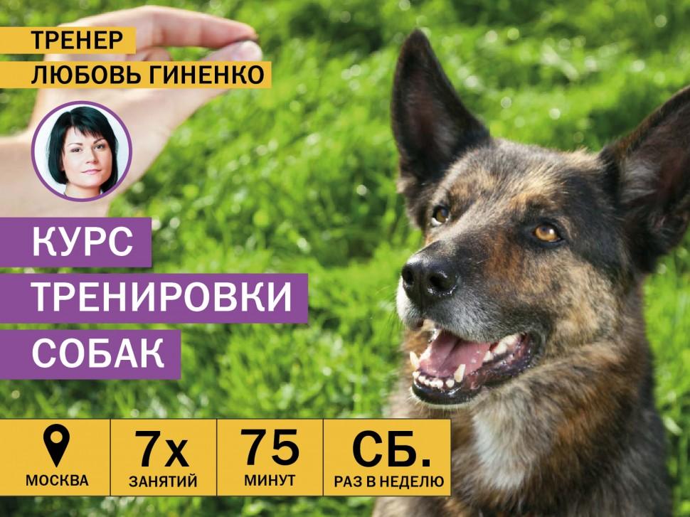 Курсы тренировки взрослых собак в Москве