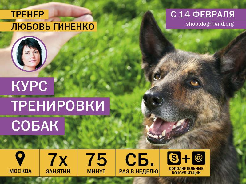 Курс воспитания собак в Москве