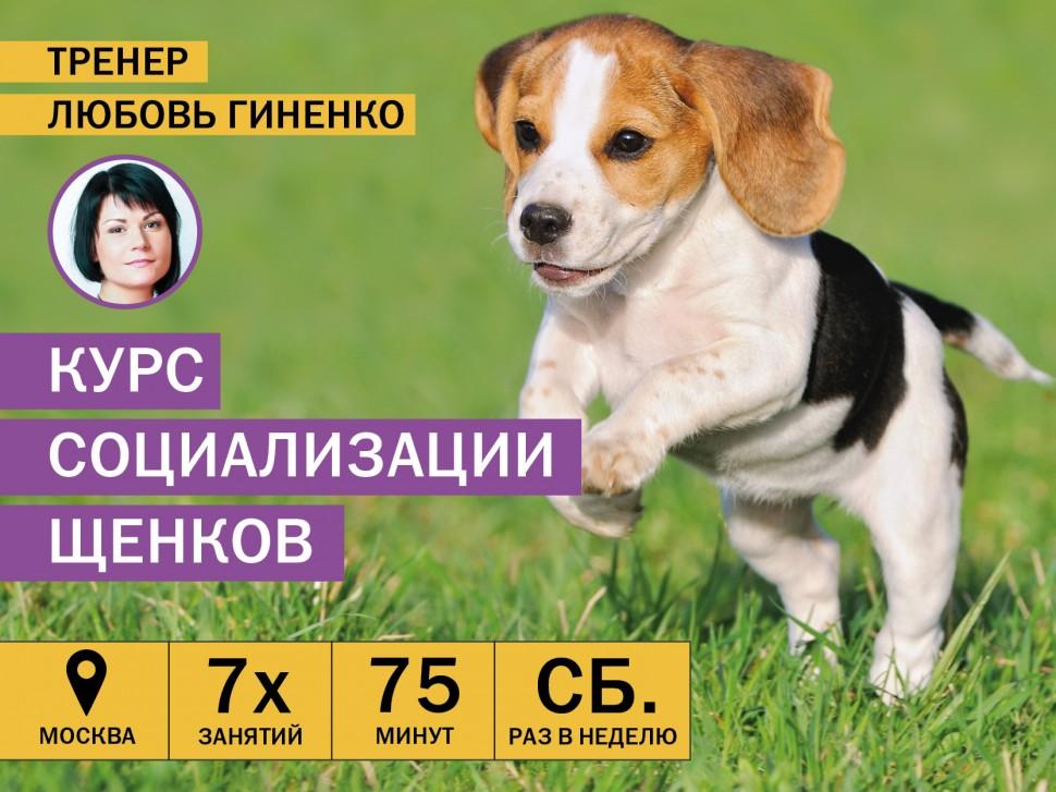 Курсы социализации щенков в Москве