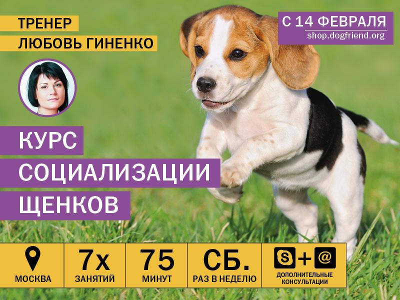 Курс воспитания щенков в Москве
