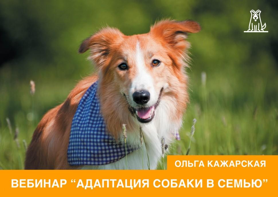 Вебинар Ольги Кажарской